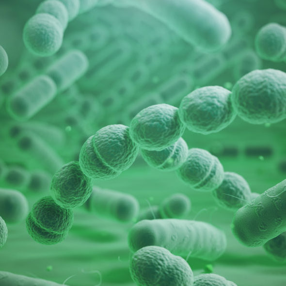 Various bacteria cells in microscope. Streptococcus pneumonia, pneumococcus, enterobacteriaceas, escherichia coli, salmonella, klebsiella and others. 3d illustration