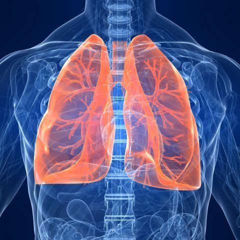 Lungs highlighted in an X-ray of a body.